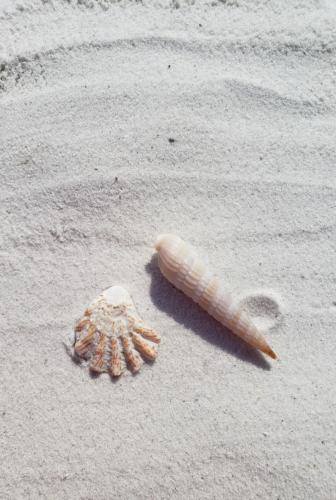 Seashells at Sanibel Island, Florida