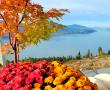 5 Simple Steps to Enchanting Pumpkin Topiaries!