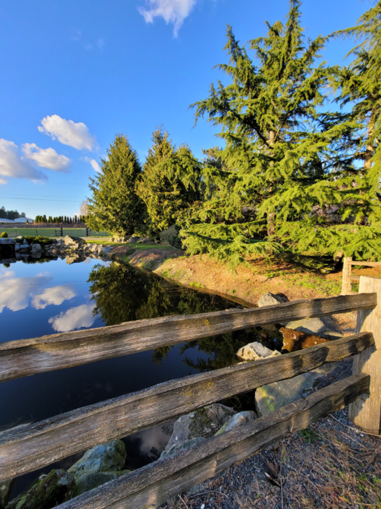 Pond where I grew up